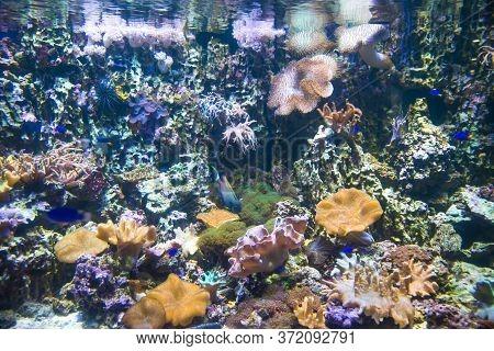 Kind Of Aquarium With Corals Yellow Lilac Beige, Bright Exotic Fish. Marine Life, Exotic Fish, Subtr