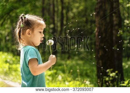 Little Girl Blows On Dandelion. Little Girl Walks Across The Field