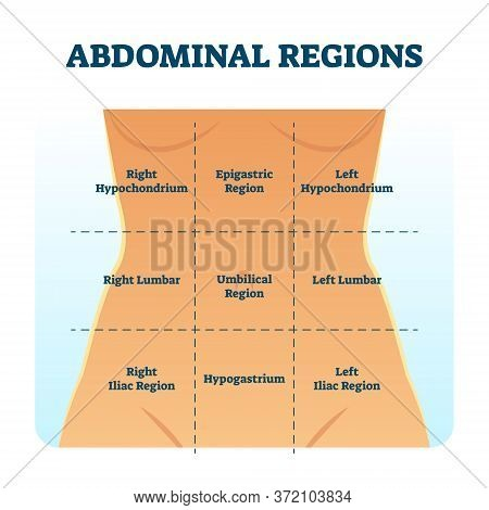 Abdominal Quadrant Regions Scheme As Stomach Division Vector Illustration. Labeled Examination Graph