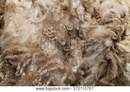 A Background Image Of A Freshly Cut Sheep Wool Fleece.