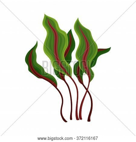 Marine Colorful Algae With Ragged Edges On The Leaves Vector Illustration