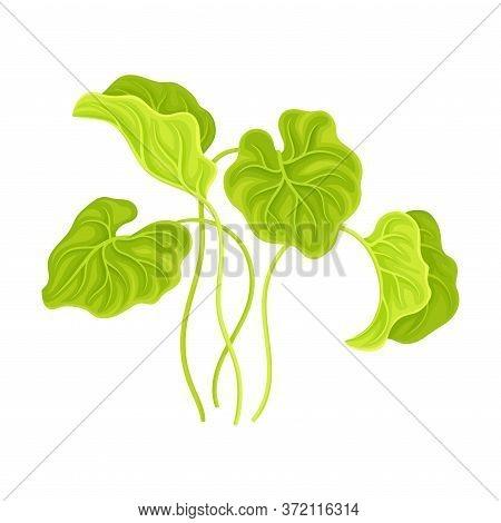 Marine Colorful Algae With Broad Leaves Vector Illustration