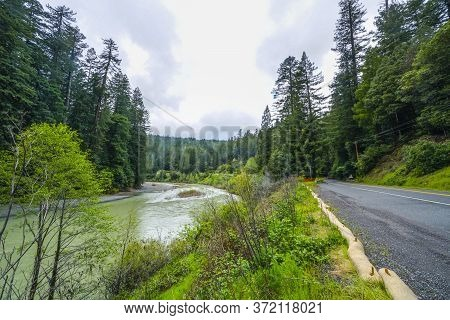 Beautiful Natural Landscape In The Redwood National Park