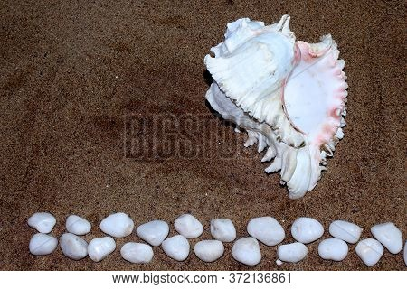 Sea Conch Shells And White Rock Stone With Sand As Background, Selective Focus With Blur.