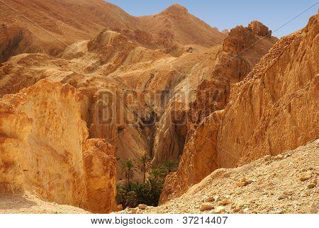 The Chebika oasis in Tunisia