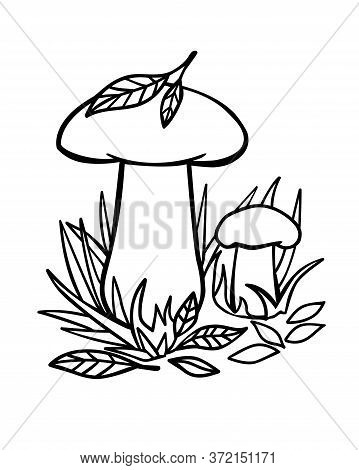 Mushrooms In The Grass - Linear Vector Illustration For Coloring. Two Ceps Large And Small In The Gr