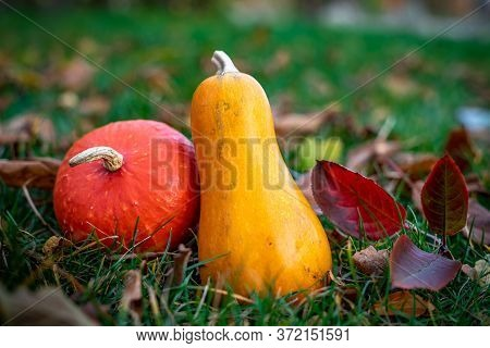 Two Decorative Pumpkins Of Different Shapes On Withered Leaves And Bright Green Grass. Autumn Backgr