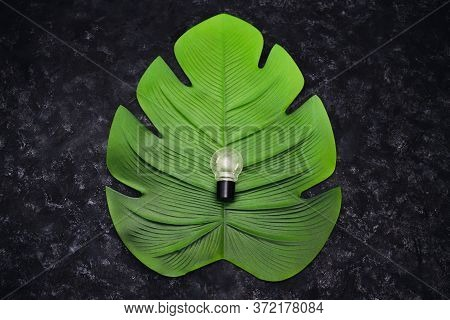 Ideas For Ecology And The Environment Concept, Lightbulb On Top Of Tropical Leaf