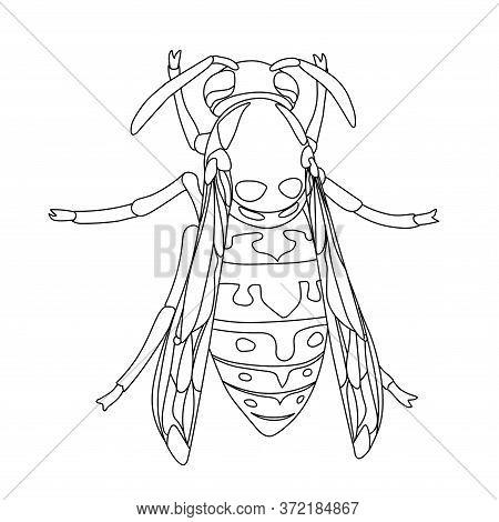 Contour Wasp.eps