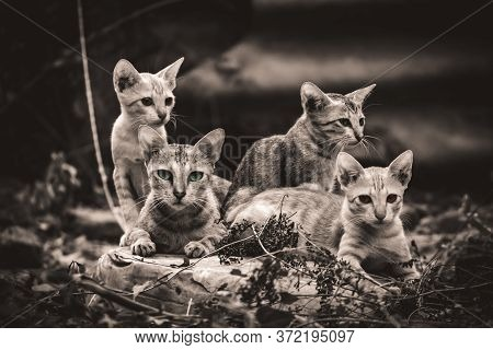 Monochrome - Cat Family Lies In The Middle Of The Forest. Family Group Of Four Fluffy Beautiful Kitt