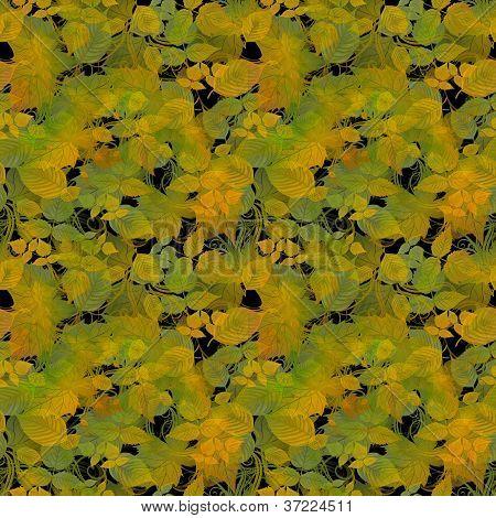 Autumn Color Leaves on Black Background