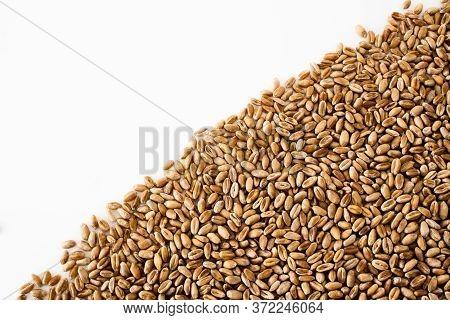 Wheat Grains On A White Background, Natural Dried Grain In The Form Of A Triangle On The Right Side