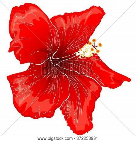 Red Flower Of Hibiscus Isolated On White Background. Tropic Travel, Exotic Flower Concept.