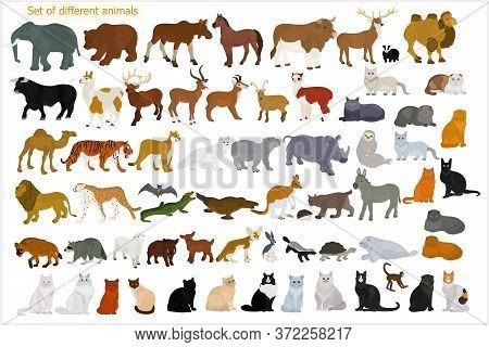 Set Of Different Animals. Wild Animals. Domestic Cats.