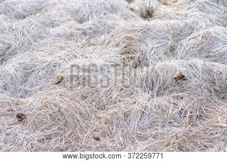 White Grass In A Drained Lake.white Grass In A Drained Lake