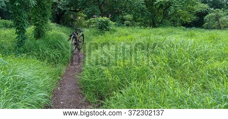 Mtb Bicycle On A Mud Trail Along Green Grass And Trees In Monsoon. Cycle In Nature. Landscape Image