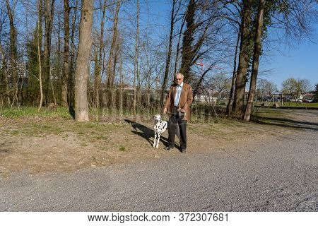 Old Man On His Evening Stroll With His Dalmatian Dog In Sunshine. Woodland Illuminated By Evening Su