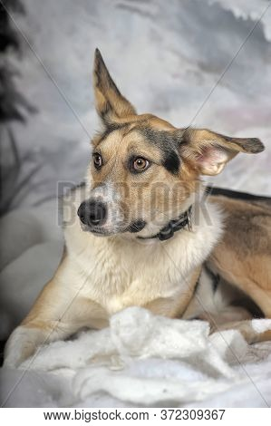 Dog On The Winter Background. Fauna, Canine.