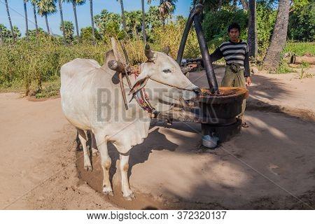 Bagan, Myanmar - December 8, 2016: Ox Powered Peanut Oil Press Near Bagan.
