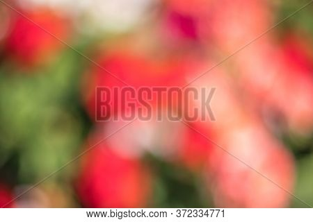 Blurred Multi Colored Red, Orange, Violet And Green Colorful Dots Background Abstract Bokeh Flowers,