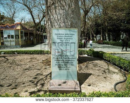 Baku, Azerbaijan - May 2, 2019: Information Near A Tree Chorisia Speciaosa Baobab Tree 215 Years Old