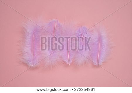 Pink Feathers Background.feathers In Pastel Colors. Feathers Set Close-up Background. Delicate Purpl