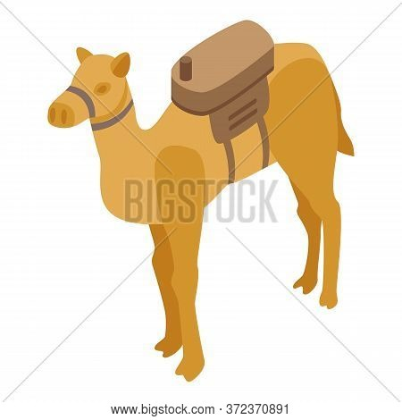 Egypt Camel Icon. Isometric Of Egypt Camel Vector Icon For Web Design Isolated On White Background