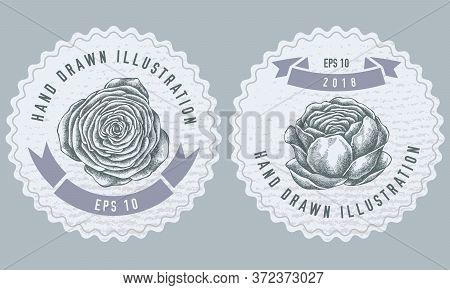 Monochrome Labels Design With Illustration Of Ranunculus Stock Illustration