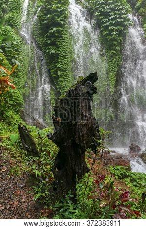 Old Stump At Amertha Hidden Spray Waterfall. Water Splash From Waterfall Showered Old Tree Trunk. Ba