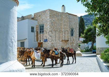 Greece, Thessaloniki Gulf, Hydra, The Characteristic Donkeys Of The Island