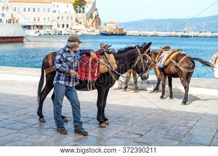 Hydra, Greece -  March 17, 2018:  The Characteristic Donkeys Of The Island