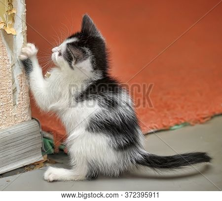 Kitten Sharpens The Claws On The Wallpaper