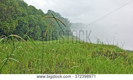 Rain At Victoria Falls. Raindrops Are Visible On The Lush Green Grass. Over The Gorge Where The Zamb