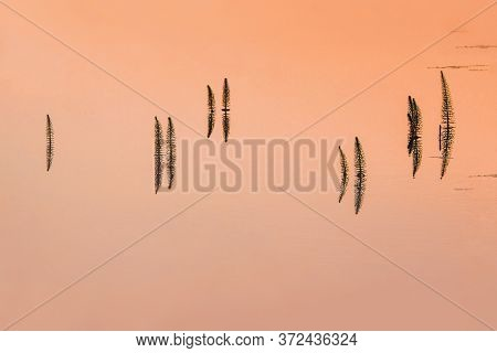 Minimalistic View Of Horsetail Of The Water At Sunset. Water Surface At Sunset. Natural Natural Back