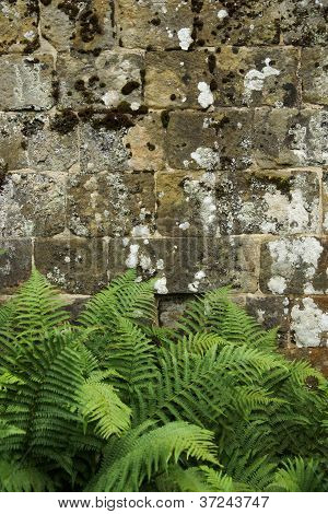 Old Stone Wall Background / Texture