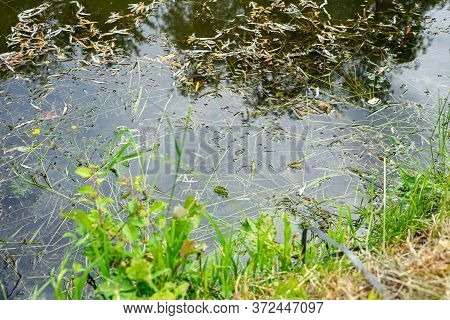 The Water Near The River Is Polluted With Garbage And Tree Leaves. Polluted River