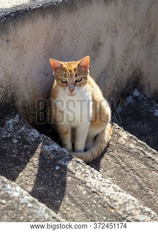 Stray Cat Sitting On Stairway Looking At The Camera