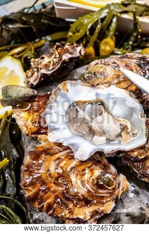 Fresh Open Zeeuwse Creuse Pacific Or Japanese Oysters Molluscs On Fish Market In Netherlands