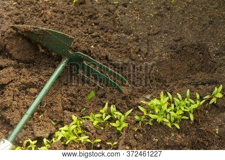 Hoe From Hand Tools Used For Hoeing And Planting . Caring For Garden Herbts. Garden Tools.
