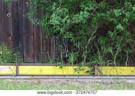 The Dog Hid Under A Bush Near The Fence