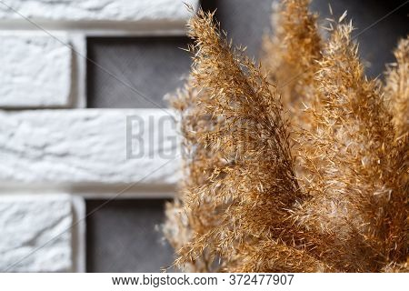 Dried Reeds As Home Decor. Minimalistic Cozy Interior. Natural Interior. Still Life With A Reed. Gra