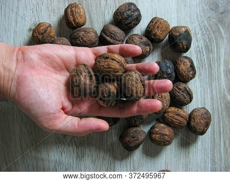 Close Up Of Whole Walnuts On Male Handon Wooden Background. Unpeeled Walnut. Vegetarian Food Concept