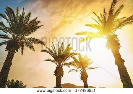 Date Palms On The Beach With Sunflare. Wallpaper, Background