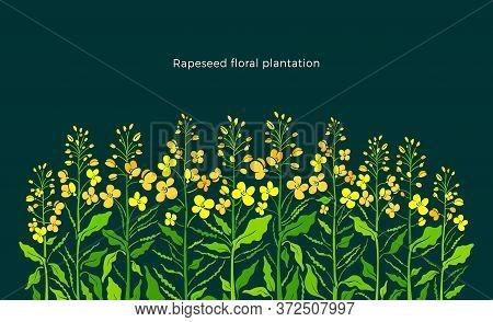 Rapeseed Border. Vector Canola Set, Mustard Plant. Art Shape Of Green Leaf, Summer Bud, Yellow Flowe