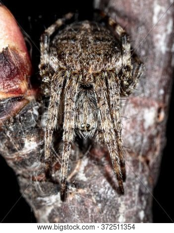 The Spider Hid On A Tree Branch. Macro Nature In Spring.