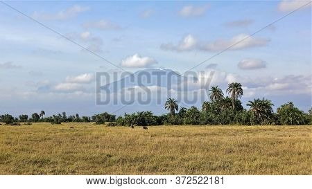 Savannah In Kenya. In The Distance, Warthogs Graze On Dry Yellow Grass. Above The Thickets Of Palm T