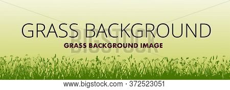 Grass Background Vector. Silhouette Of Meadow Flowering Herbes. On A Yellow Sunny Summer Background.