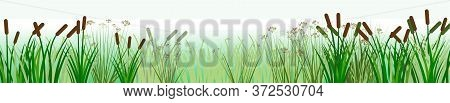 The Reeds. Vector. Thickets Of Sedge, Marsh Plants And Reeds. Bank Of The River Or Lake. Horizontal