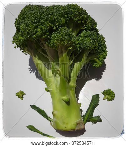 Fresh Green Broccoli Looks Like Small Tree Shadows Reflected Beautifully In White Plate And It Helps