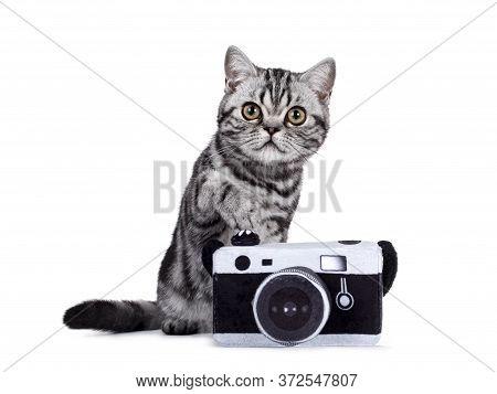 Sweet Silver Tabby British Shorthair Cat Kitten, Sitting Behind Toy Photo Camera Looking Towards Cam